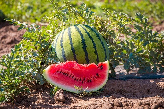 Creative ways to eat watermelons this summer